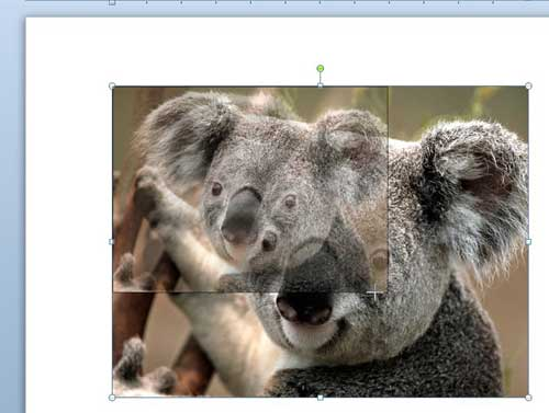 how to resize a picture in word 2010