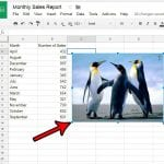 how to insert picture in google sheets